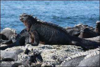 The lure of the Galapagos Islands Cruise